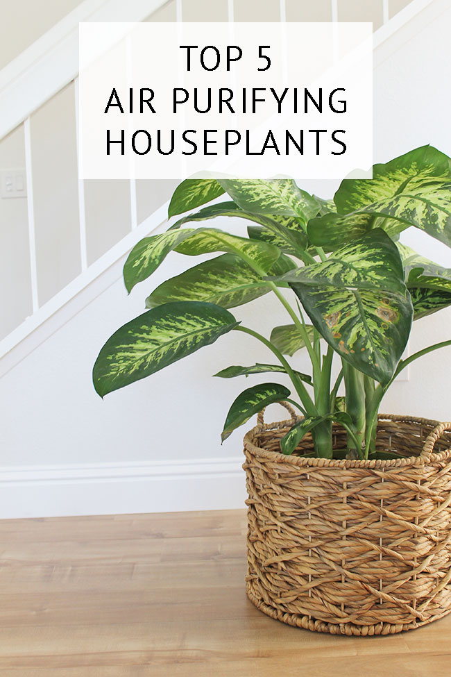 Top 5 air purifying plants and which airborne carcinogens they can reduce or eliminate.